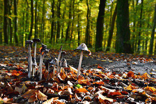Mushrooms, Autumn, Forest, Forest Floor, Nature, Brown