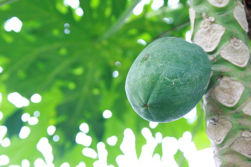 Green, Papaya, Food, Fruit, Healthy, Nature, Natural