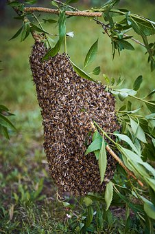 Bees, Beehive, Hive, Insect, Honey Bees, Bee Keeping