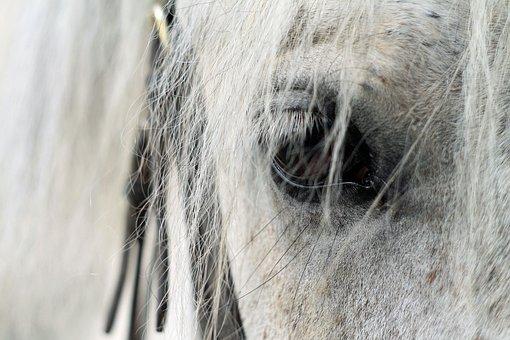 Eye, Horse, Krupnyj Plan, White Horse, Portrait, Eyes