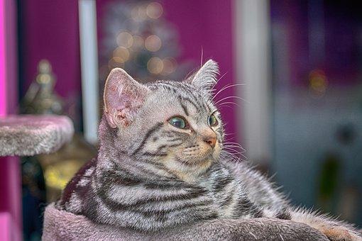 Cat, Kitten, Young Animal, Domestic Cat, Pet, Cute