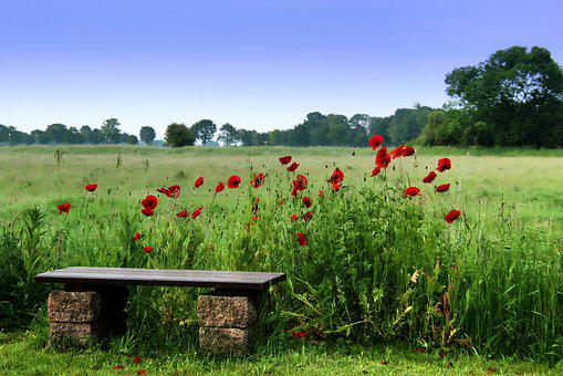 Poppy, Bank, Sit, Rest, Seat, Bench, Relax, Nature