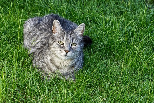 Cat, Enjoy The Sun, Domestic Cat, Animal, Pet, Tiger