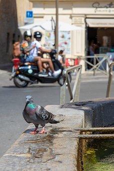 Dove, Bird, Pigeon, Animal, Street, Scooter, City