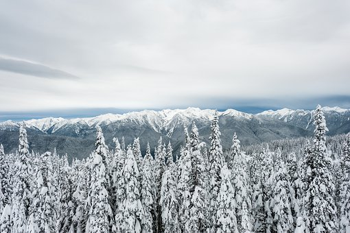 Forest, Snow, Clouds, Gloom, Winter, Nature, Cold
