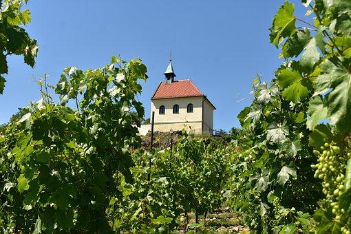 Vineyard, The Village, City, Wine, Nature, The Winery