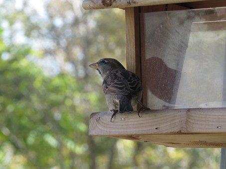 Bird, Bird Feeder, Finch, Female, House Finch, Wood
