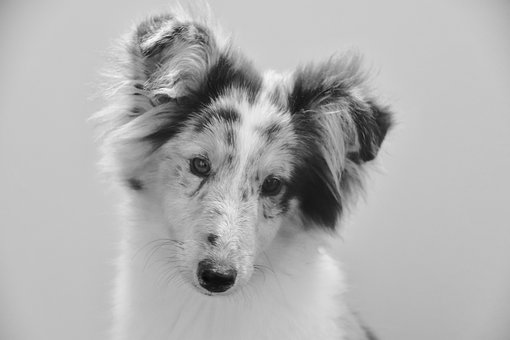 Dog, Young Bitch, Black And White Photo