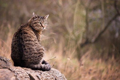 Cat, Garden, Pet, Animal, Cute, Fur, Nature, Feline