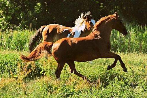 Horse, Animal, Equine, Gallop, Mane, Tail, Horse's Leg