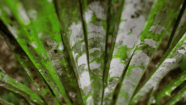 Weathered, Bamboo, Nature, Plant, Green