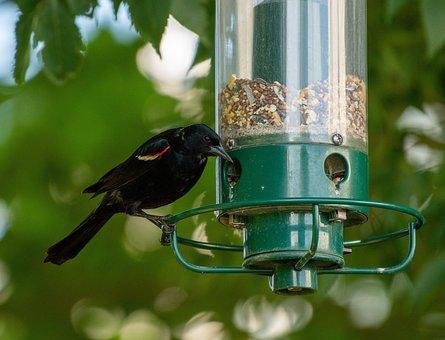 Bird Feeder, Bird, Birdwatching, Feeder, Nature, Garden
