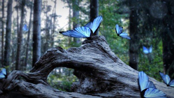 Dante Legister, Beautiful, Blue, Nature, Calm, Outdoor