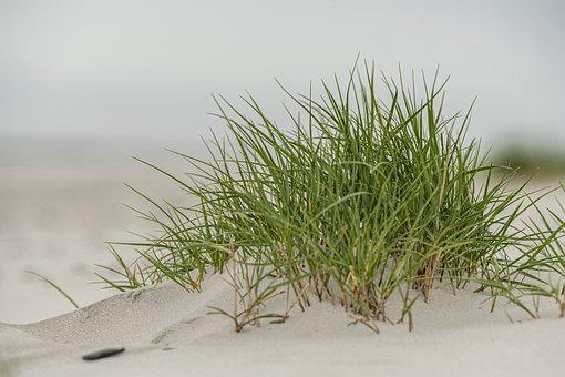 Beach, Baltic Sea, Coast, Sand, Vacations, Water