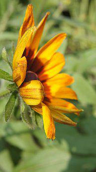 Echinacea, Wildflowers, Flower, Yellow, Yellow Flowers