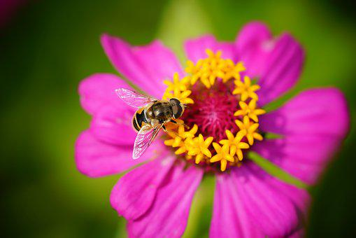 Bee, Flower, Nature, Autumn, Honey, Insect, Violet
