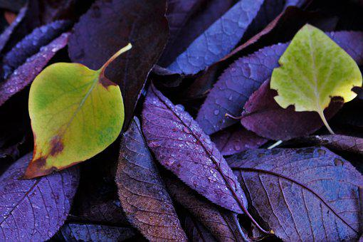 Leaves, Green, Purple, Colorful, Nature