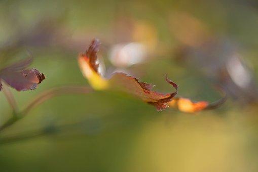 Autumn, Leaf, Nature, Tree, Colorful, Fall, Mood, Trees