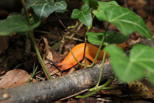 Snail, Nature, Forest, Crawl, Slowly, Mollusk