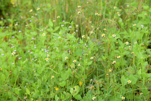 Wildflowers, Green, Wallpaper, Nature, Summer, Colorful