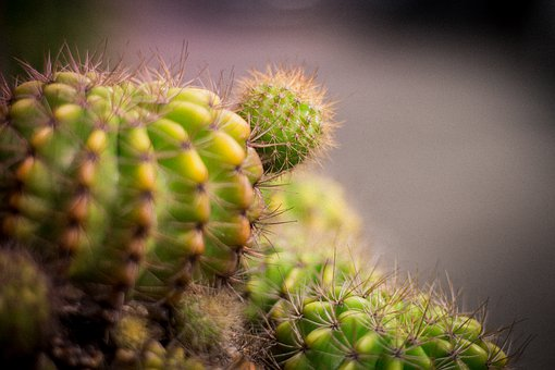 Cylinder Diamond, Plant, Plants, Blade, Shrub, Nature
