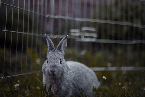 Rabbit, Rodents, Mammal, Bunny, Cute, Animal, Nature