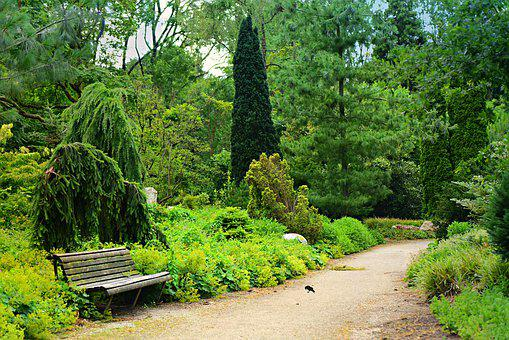 Park, Path, Bench, Conifer Garden, Nature, Scenic, Walk