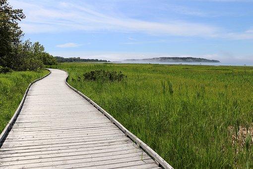 Sidewalk, Wood, Nature, Summer, Green, Grass, Tree