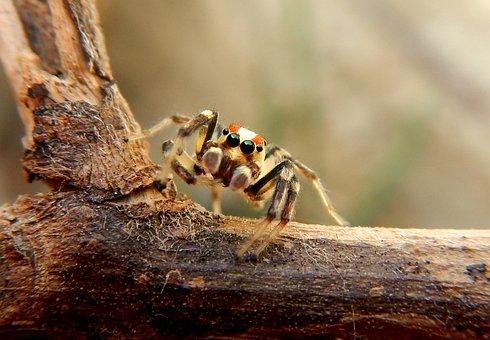 Spider, Web, Tarantula, Arachnid, Trap, Insects