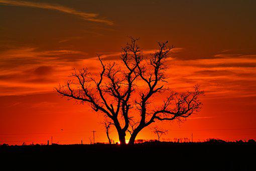 Tree, Landscape, Sunset, Nature, Trees, Clouds, Sky