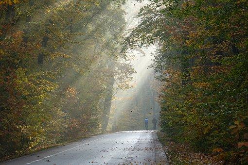 Trees, Avenue, Tree-lined Street, Light, Sun Rays