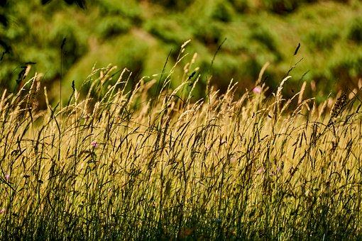 Meadow, Grass, Kössen, Hagertal, Austria, Valley, Tyrol
