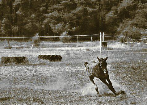 Foal, Horse, Animal, Young Animal, Play, Race, Wild