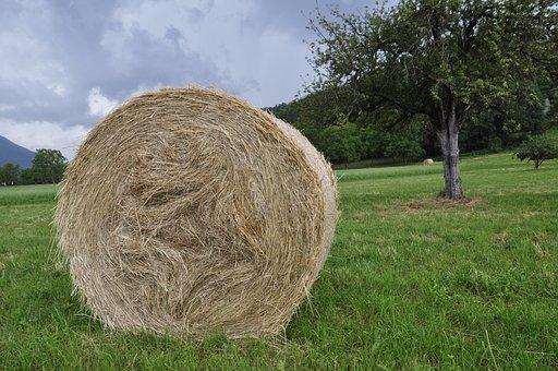 Prato, Hay, Summer, Agriculture, Field, Landscape