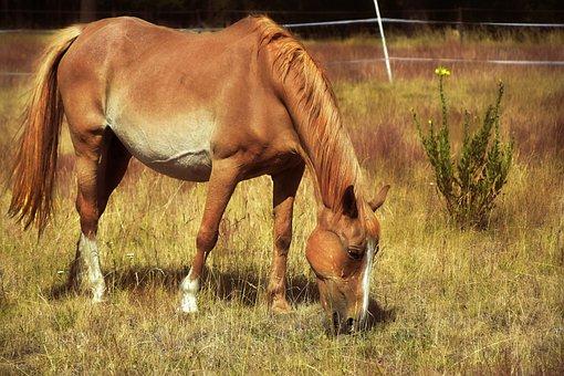 Horse, Mare, Animal, Animal Portrait, Portrait, Pasture