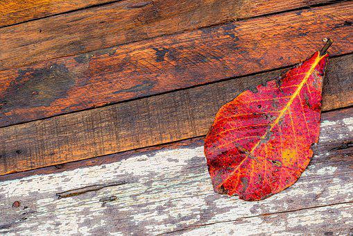 Leaf, Wood, Texture, Background, Red, Pattern, Surface
