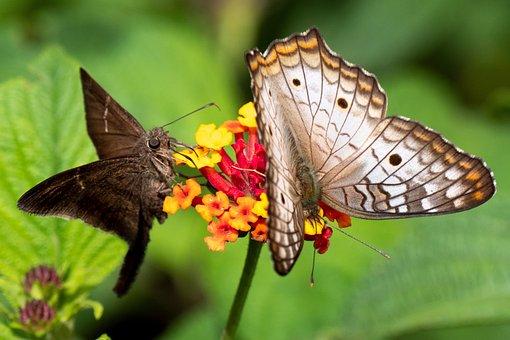 Ecuador, Tropics Butterfly, Butterfly, Nature, Texture