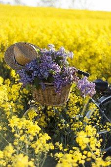 May Holidays, May, Rapeseed, Canola Field, Field