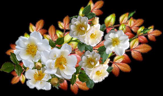 Roses, Flowers, Autumn, Leaves, Arrangement, Cut Out