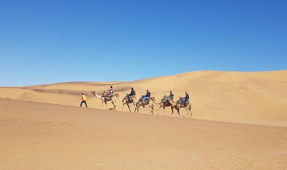 Namibia, Camel, Desert, Sand, Dunes, Sun