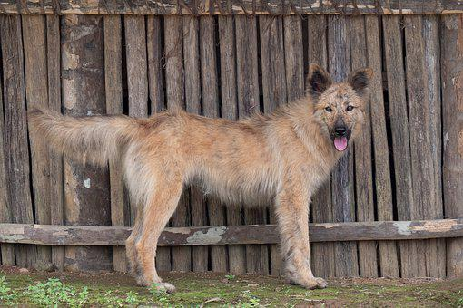 Dog, Hybrid, Pet, Portrait, View, Dog Look