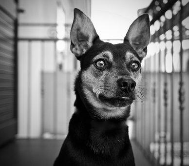 Dog, Ears, Animal, Pet, Eyes, Muzzle, Love, Cute, Vista
