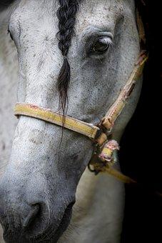 Horse, Snout, Pony, Farm, Nature, Cute, White, Mammals