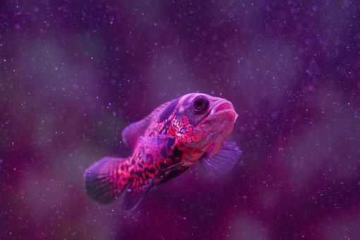Fish, Aquarium, Water, Underwater