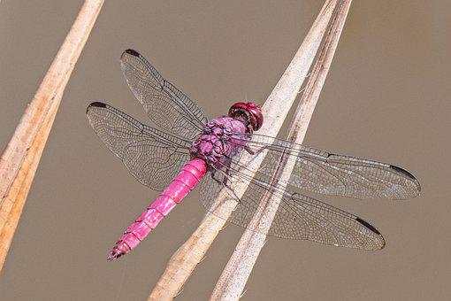 Dragonfly, Insect, Flight Insect, Wing, Close Up
