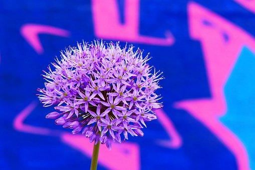 Decorative Garlic, Flower, Garden, Graffiti, Wall