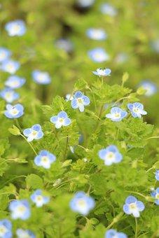 Blue Flower, Greenery, Flowers, Blue, Scenery, Scenic