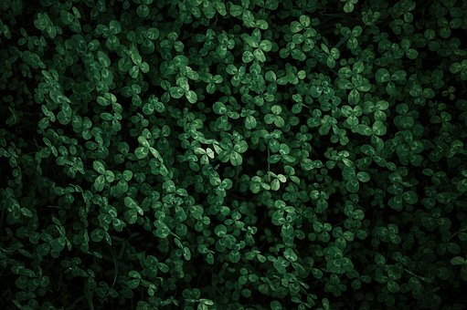Clover, Green, Field, Natural-light, Days, Rural