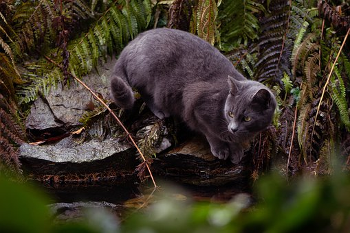 Cat, Animals, Pets, Garden, Nature, Pond, Grey, Out
