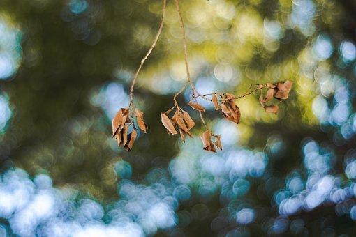 Leaf, Leaves, Nature, Green, Autumn, Tree, Wood, Trees
